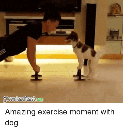 Funny dogs running gifs