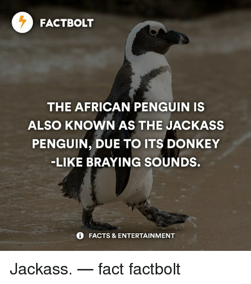 Funny jackass quotes