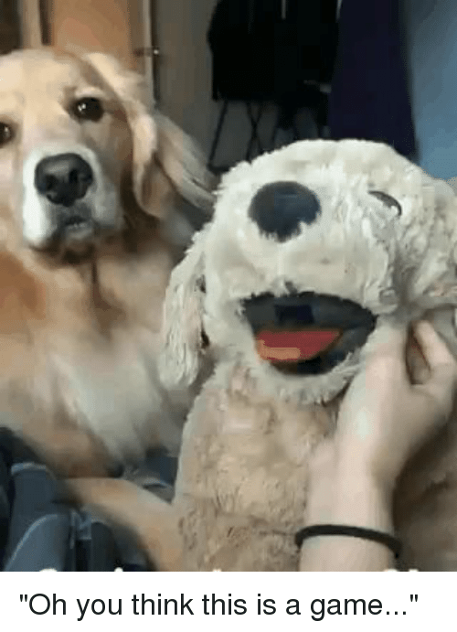Oh you dog gif