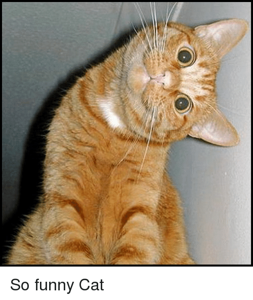 Cat Communication What Your Cats Body Language Says