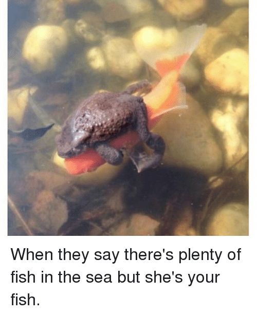 Theres plenty of fish in the sea dating