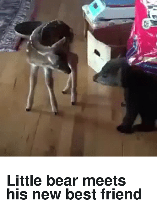 little bear: <h2>Little bear meets his new best friend</h2>