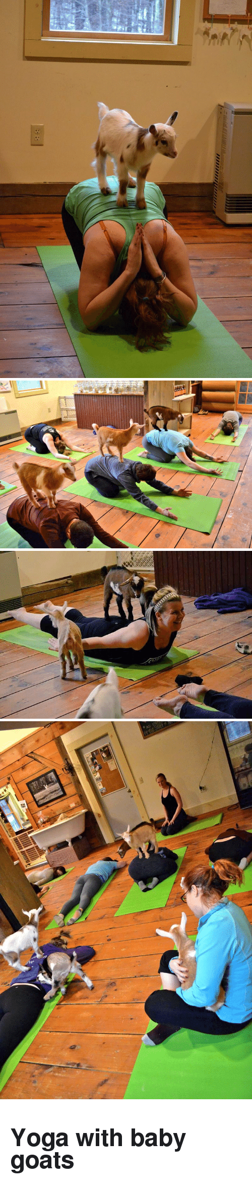 Baby Goats: <h2>Yoga with baby goats</h2>