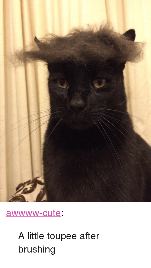 """toupee: <p><a class=""""tumblr_blog"""" href=""""http://awwww-cute.tumblr.com/post/70588622348/a-little-toupee-after-brushing"""" target=""""_blank"""">awwww-cute</a>:</p> <blockquote> <p>A little toupee after brushing</p> </blockquote>"""