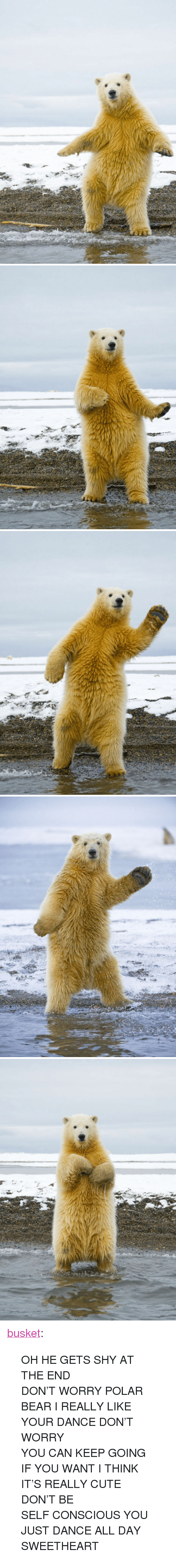 "just dance: <p><a class=""tumblr_blog"" href=""http://busket.tumblr.com/post/32647524575/oh-he-gets-shy-at-the-end-dont-worry-polar-bear"">busket</a>:</p><blockquote> <p>OH HE GETS SHY AT THE END</p> <p>DON'T WORRY POLAR BEAR I REALLY LIKE YOUR DANCE DON'T WORRY</p> <p>YOU CAN KEEP GOING IF YOU WANT I THINK IT'S REALLY CUTE</p> <p>DON'T BE SELF CONSCIOUS YOU JUST DANCE ALL DAY SWEETHEART</p> </blockquote>"