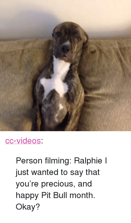 """Ralphie: <p><a class=""""tumblr_blog"""" href=""""http://cc-videos.tumblr.com/post/149102157733"""">cc-videos</a>:</p> <blockquote> <p>Person filming: Ralphie I just wanted to say that you're precious, and happy Pit Bull month. Okay?</p> </blockquote>"""