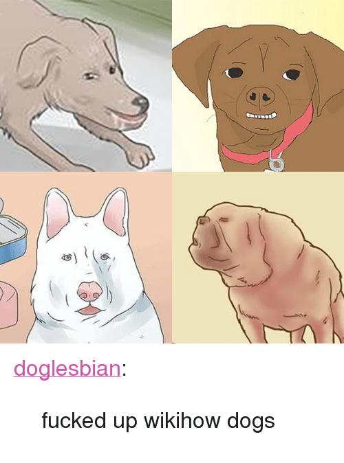 """Wikihow: <p><a class=""""tumblr_blog"""" href=""""http://doglesbian.tumblr.com/post/132779078151"""" target=""""_blank"""">doglesbian</a>:</p> <blockquote> <p>fucked up wikihow dogs</p> </blockquote>"""