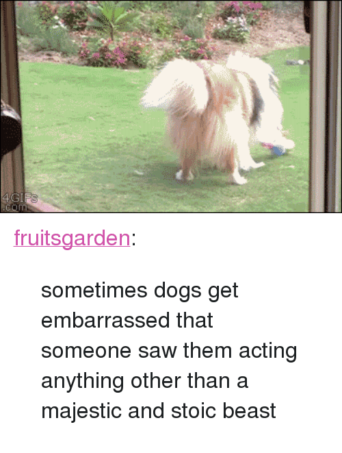 "Stoic: <p><a class=""tumblr_blog"" href=""http://fruitsgarden.tumblr.com/post/81971941785/sometimes-dogs-get-embarrassed-that-someone-saw"" target=""_blank"">fruitsgarden</a>:</p> <blockquote> <p>sometimes dogs get embarrassed that someone saw them acting anything other than a majestic and stoic beast</p> </blockquote>"