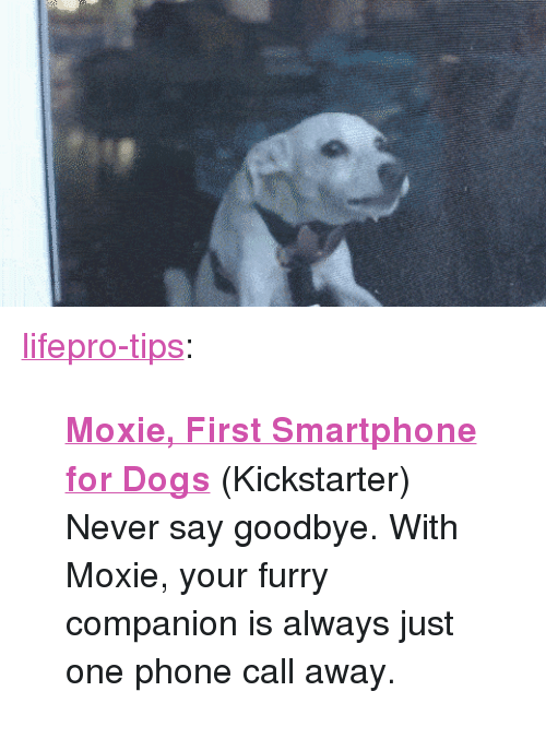 """Tinyurl: <p><a href=""""http://lifepro-tips.tumblr.com/post/173330768517/moxie-first-smartphone-for-dogs-kickstarter"""" class=""""tumblr_blog"""">lifepro-tips</a>:</p><blockquote><p>  <b><a href=""""https://tinyurl.com/ydeuvjvp"""">Moxie, First Smartphone for Dogs</a></b> (Kickstarter)<br/> Never say goodbye. With Moxie, your furry companion is always just one phone call away.<br/></p></blockquote>"""
