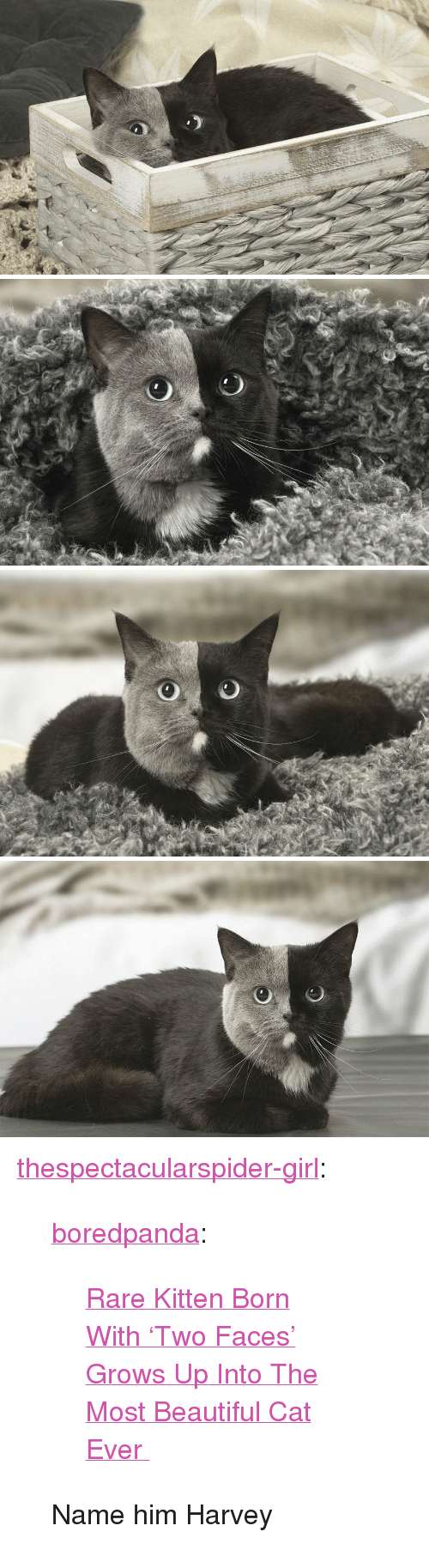 """two faced: <p><a href=""""http://thespectacularspider-girl.tumblr.com/post/173880230099/boredpanda-rare-kitten-born-with-two-faces"""" class=""""tumblr_blog"""">thespectacularspider-girl</a>:</p> <blockquote> <p><a href=""""http://boredpanda.tumblr.com/post/171171993455/rare-kitten-born-with-two-faces-grows-up-into"""" class=""""tumblr_blog"""">boredpanda</a>:</p> <blockquote><p><a href=""""https://www.boredpanda.com/two-faced-cat-british-short-hair-france-jean-michel-labat/"""">  Rare Kitten Born With 'Two Faces' Grows Up Into The Most Beautiful Cat Ever  </a><br/></p></blockquote> <p>Name him Harvey</p> </blockquote>"""