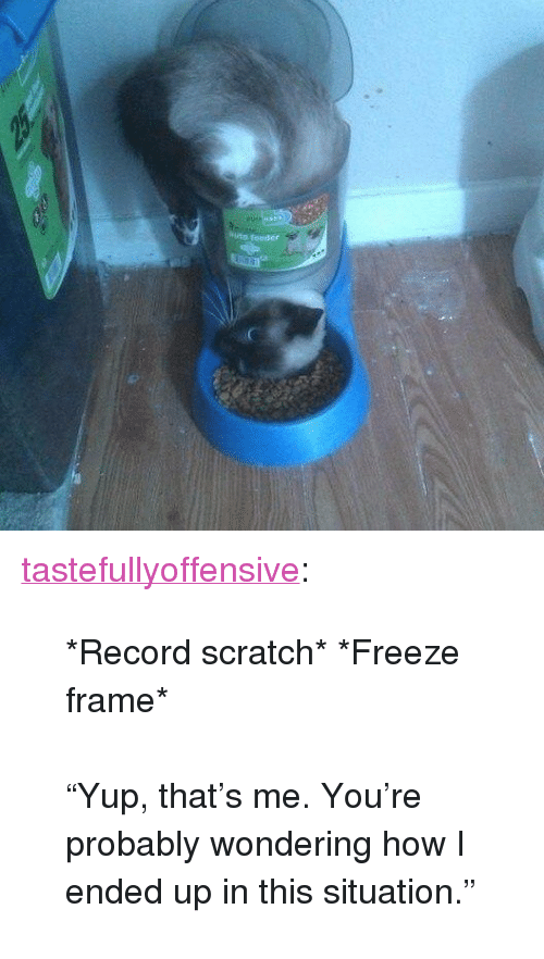 """Record Scratch: <p><a href=""""http://tumblr.tastefullyoffensive.com/post/159553034328/record-scratch-freeze-frame-yup-thats-me"""" class=""""tumblr_blog"""">tastefullyoffensive</a>:</p>  <blockquote><p>*Record scratch* *Freeze frame*<br/><br/>""""Yup, that's me. You're probably wondering how I ended up in this situation.""""</p></blockquote>"""