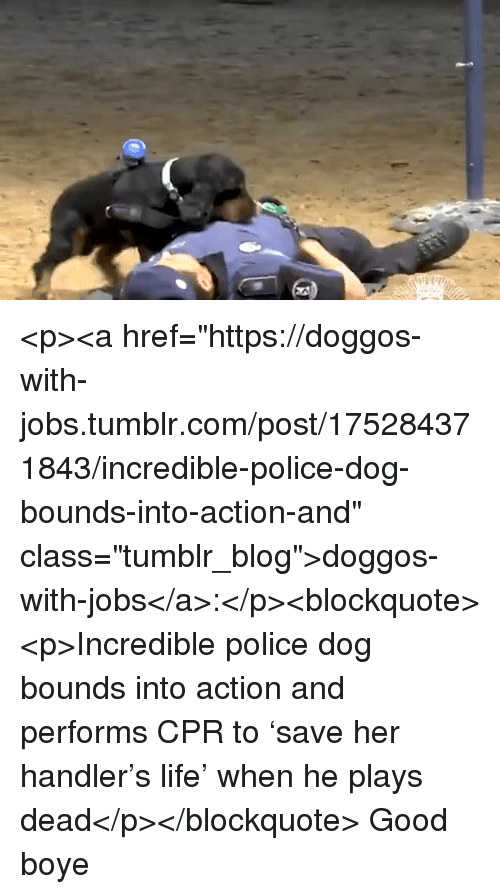 """cpr: <p><a href=""""https://doggos-with-jobs.tumblr.com/post/175284371843/incredible-police-dog-bounds-into-action-and"""" class=""""tumblr_blog"""">doggos-with-jobs</a>:</p><blockquote><p>Incredible police dog bounds into action and performs CPR to 'save her handler's life' when he plays dead</p></blockquote> Good boye"""