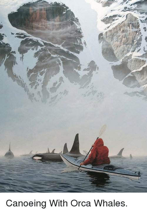 Canoeing: <p>Canoeing With Orca Whales.</p>