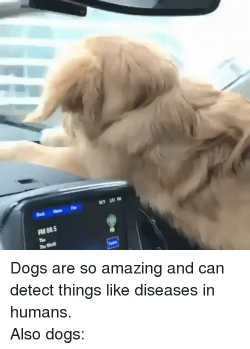 so amazing: <p>Dogs are so amazing and can detect things like diseases in humans.</p><p>Also dogs:<br/></p>