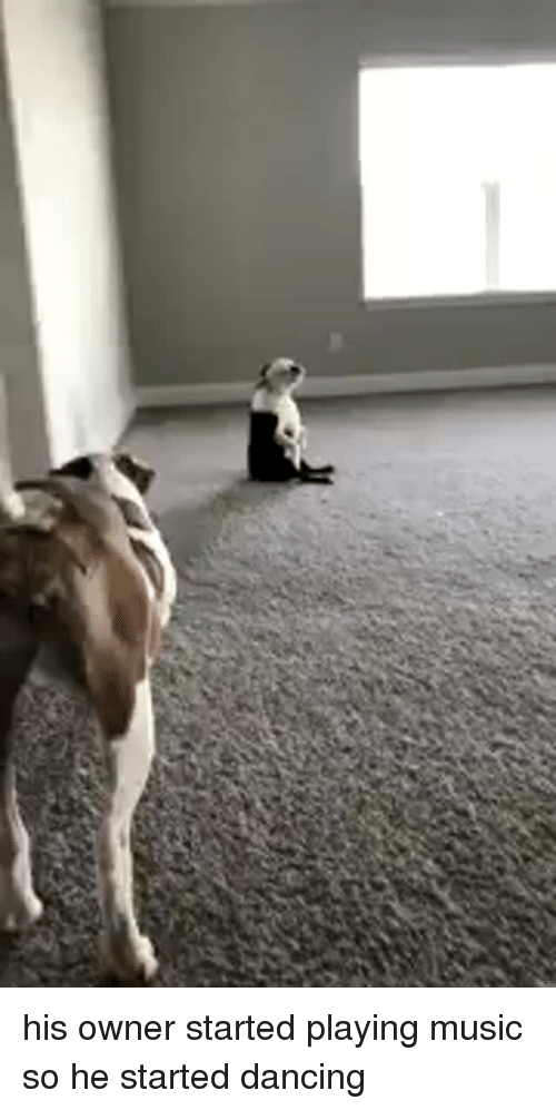 Playing Music: <p>his owner started playing music so he started dancing<br/></p>