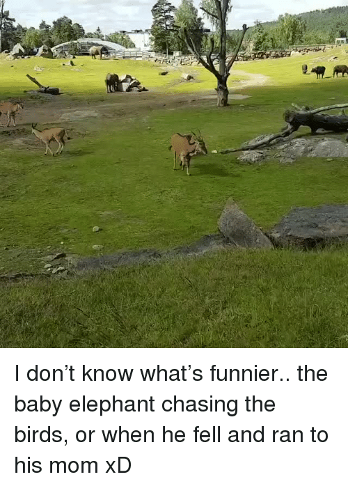 Baby Elephant: <p>I don&rsquo;t know what&rsquo;s funnier.. the baby elephant chasing the birds, or when he fell and ran to his mom xD<br/></p>