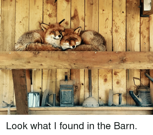 Look What I Found: <p>Look what I found in the Barn.</p>