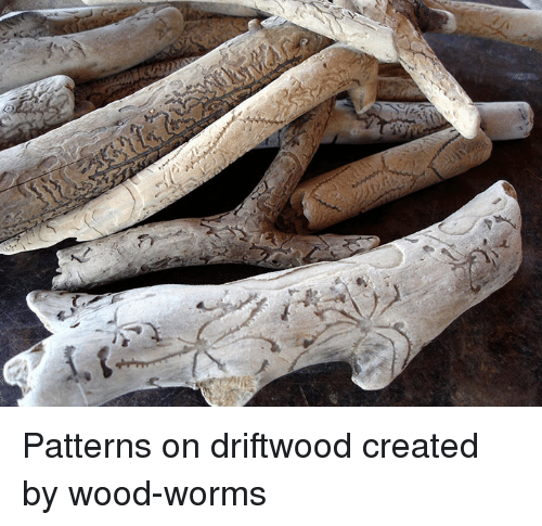 driftwood: <p>Patterns on driftwood created by wood-worms</p>