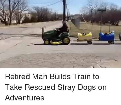 stray dogs: <p>Retired Man Builds Train to Take Rescued Stray Dogs on Adventures</p>