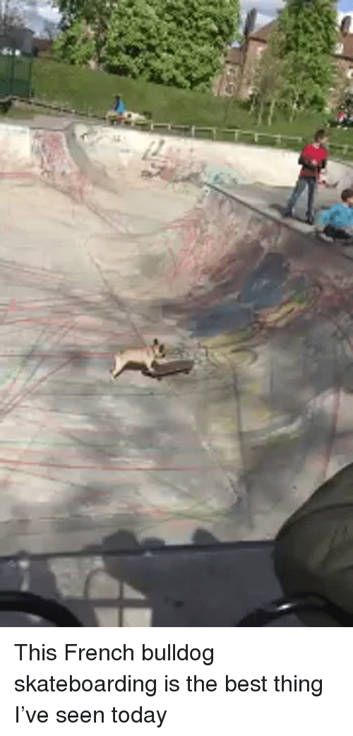 french bulldog: <p>This French bulldog skateboarding is the best thing I&rsquo;ve seen today<br/></p>