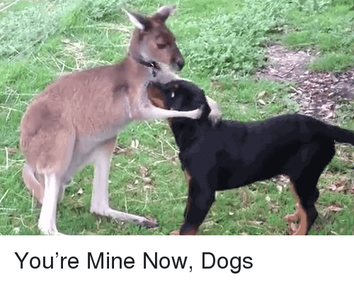 Mine Now: <p>You&rsquo;re Mine Now, Dogs</p>
