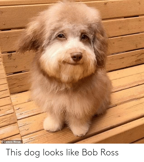 ross: ©Caters News This dog looks like Bob Ross