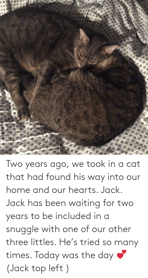 Littles: े ३  13  22  א אא א  3  3 3 Two years ago, we took in a cat that had found his way into our home and our hearts. Jack. Jack has been waiting for two years to be included in a snuggle with one of our other three littles. He's tried so many times. Today was the day 💕 (Jack top left )