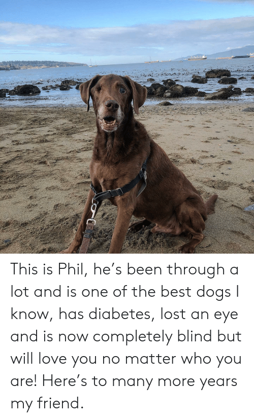 Been Through A Lot: ০০ This is Phil, he's been through a lot and is one of the best dogs I know, has diabetes, lost an eye and is now completely blind but will love you no matter who you are! Here's to many more years my friend.