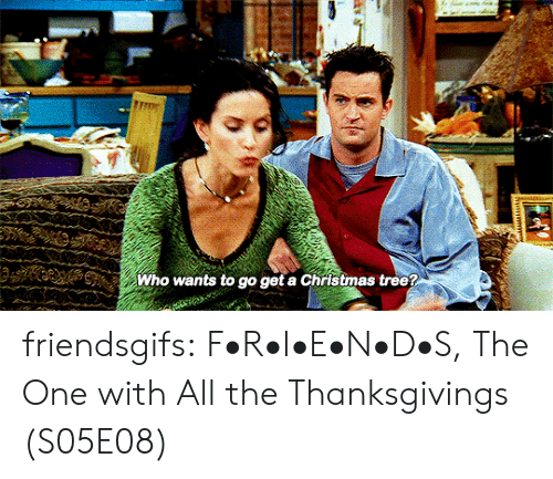 Christmas Tree: మ  Who wants to go get a Christmas tree? friendsgifs:  F•R•I•E•N•D•S, The One with All the Thanksgivings (S05E08)