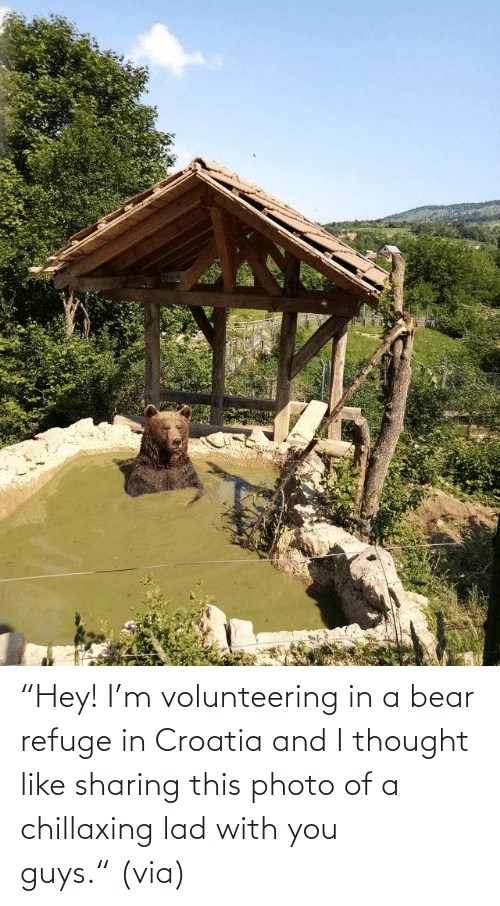 "via: ""Hey! I'm volunteering in a bear refuge in Croatia and I thought like sharing this photo of a chillaxing lad with you guys."" (via)"