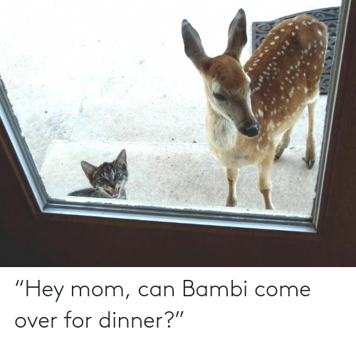 "over: ""Hey mom, can Bambi come over for dinner?"""