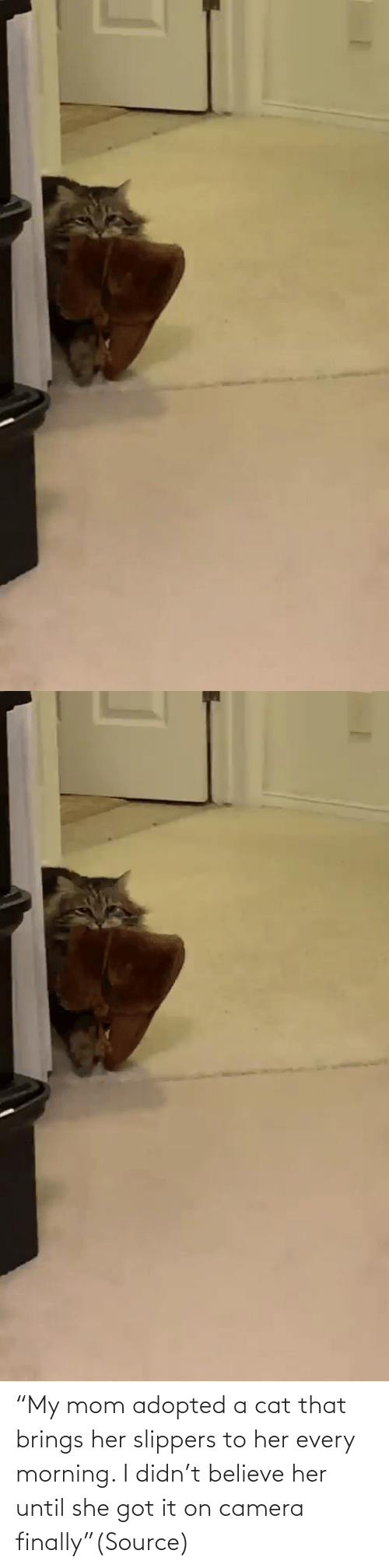 "morning: ""My mom adopted a cat that brings her slippers to her every morning. I didn't believe her until she got it on camera finally""(Source)"