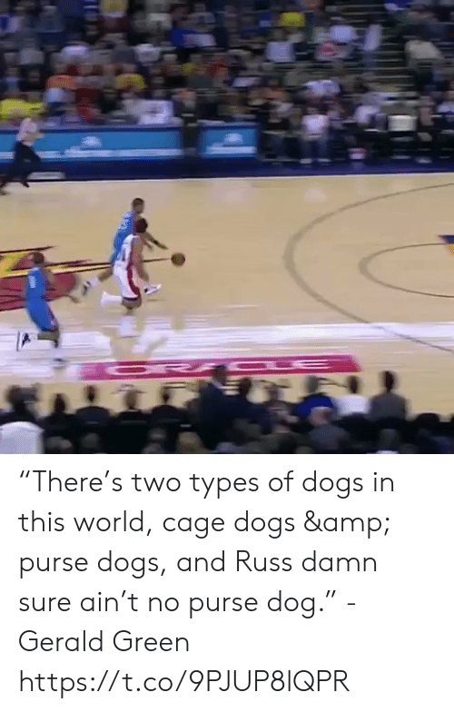 """russ: """"There's two types of dogs in this world, cage dogs & purse dogs, and Russ damn sure ain't no purse dog."""" - Gerald Green  https://t.co/9PJUP8lQPR"""