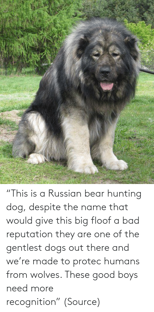 "Dogs: ""This is a Russian bear hunting dog, despite the name that would give this big floof a bad reputation they are one of the gentlest dogs out there and we're made to protec humans from wolves. These good boys need more recognition"" (Source)"