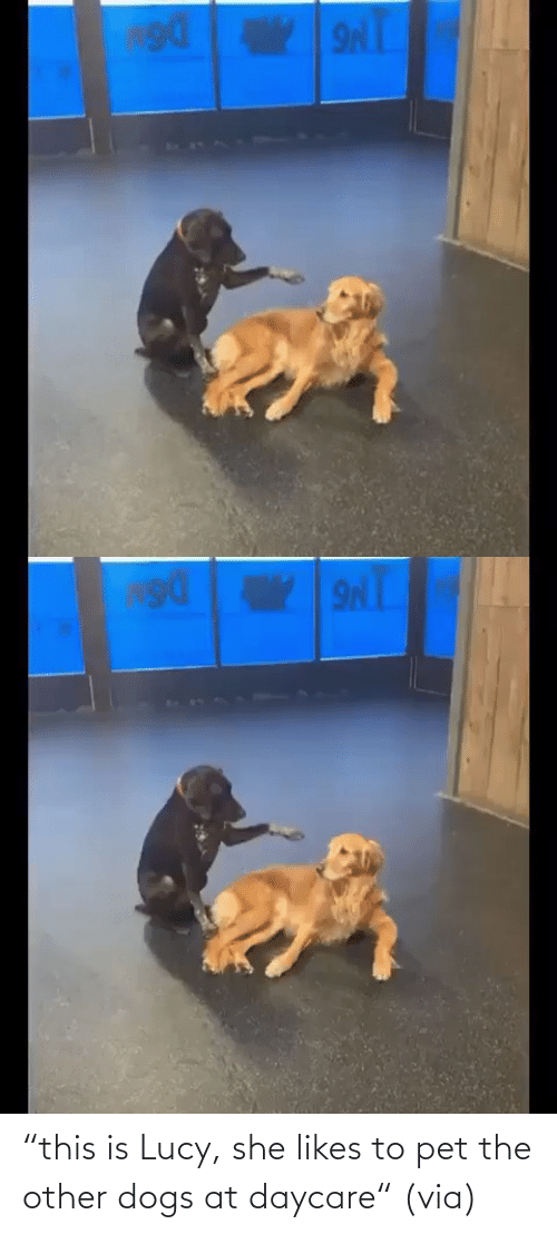 "Dogs: ""this is Lucy, she likes to pet the other dogs at daycare"" (via)"