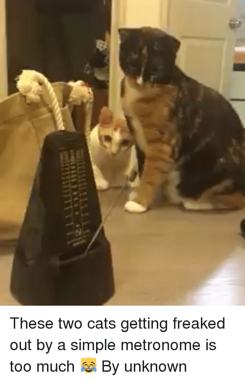 Cats, Too Much, and Metronome: 「TTTTT汀TTTT  も These two cats getting freaked out by a simple metronome is too much 😹 By unknown