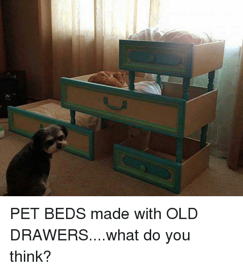 Kaleidoscope Of Colors: Dresser Drawer To Shabby Chic Dog Bed