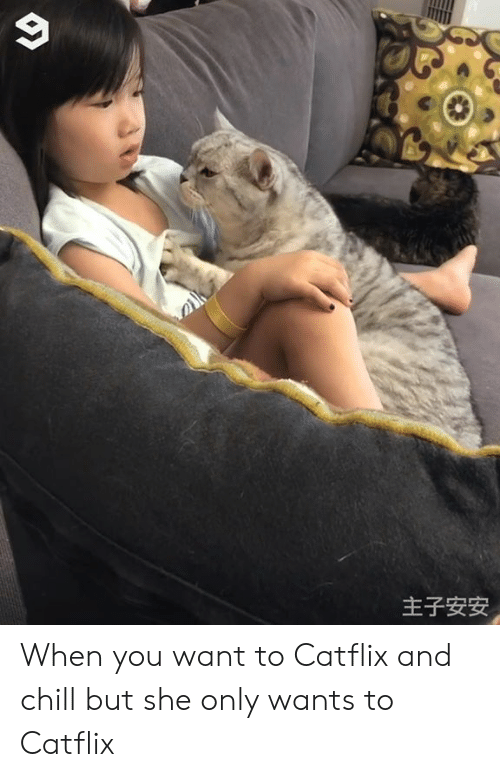 _______ and Chill: 主子安安 When you want to Catflix and chill but she only wants to Catflix