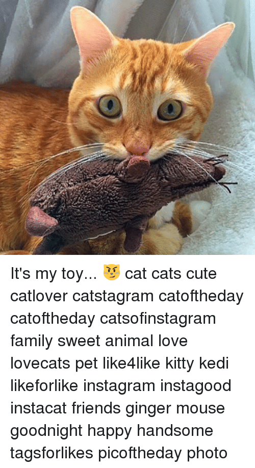 mouses: 入 It's my toy... 😼 cat cats cute catlover catstagram catoftheday catoftheday catsofinstagram family sweet animal love lovecats pet like4like kitty kedi likeforlike instagram instagood instacat friends ginger mouse goodnight happy handsome tagsforlikes picoftheday photo