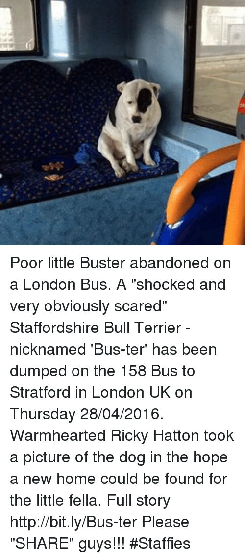 """Home: 慮 Poor little Buster abandoned on a London Bus.  A """"shocked and very obviously scared"""" Staffordshire Bull Terrier - nicknamed 'Bus-ter' has been dumped on the 158 Bus to Stratford in London UK on Thursday 28/04/2016. Warmhearted Ricky Hatton took a picture of the dog in the hope a new home could be found for the little fella. Full story http://bit.ly/Bus-ter Please """"SHARE"""" guys【ツ】!!! #Staffies"""