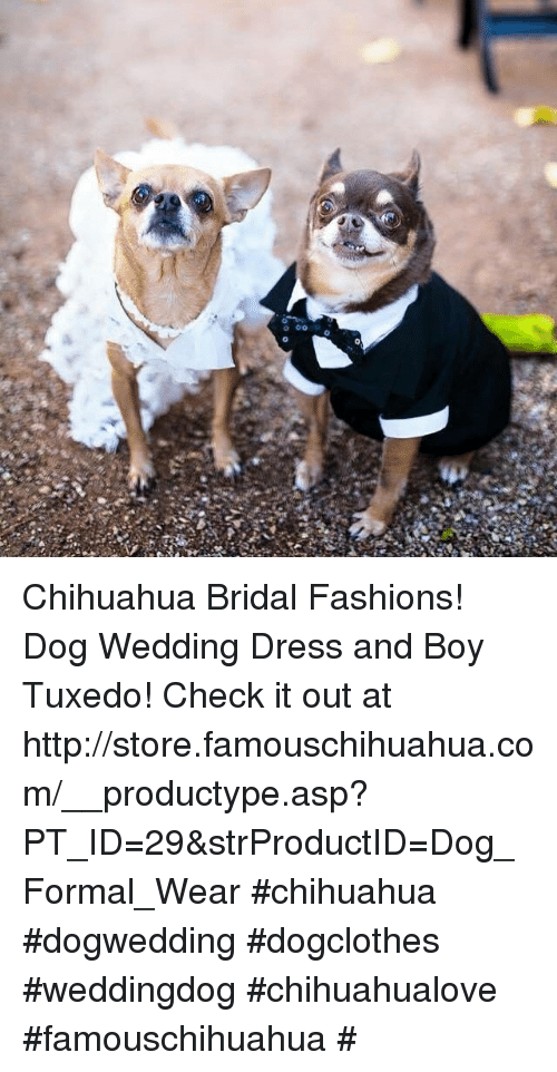 Chihuahua, Memes, and Dress: 痿 Chihuahua Bridal Fashions! Dog Wedding Dress and Boy Tuxedo! Check it out at http://store.famouschihuahua.com/__productype.asp?PT_ID=29&strProductID=Dog_Formal_Wear #chihuahua #dogwedding #dogclothes #weddingdog #chihuahualove #famouschihuahua #