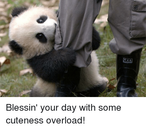 Memes, 🤖, and Day: 钌宕 Blessin' your day with some cuteness overload!