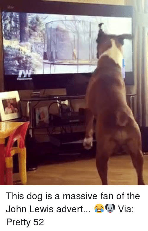Adverted: 뮬 This dog is a massive fan of the John Lewis advert... 😂🐶  Via: Pretty 52