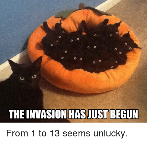 Funny, Invasion, and Just: 0  0  C O  THE INVASION HAS JUST BEGUN From 1 to 13 seems unlucky.