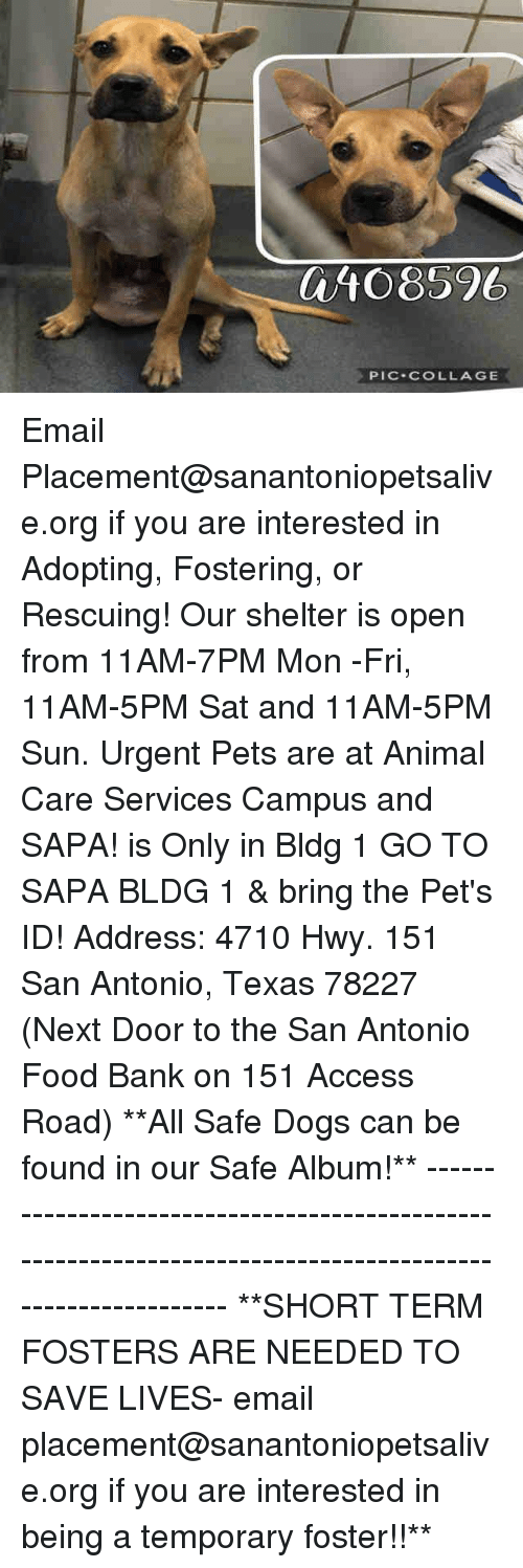 Dogs, Food, and Memes: 0/10 8596  PIC-COLLAGE Email Placement@sanantoniopetsalive.org if you are interested in Adopting, Fostering, or Rescuing!  Our shelter is open from 11AM-7PM Mon -Fri, 11AM-5PM Sat and 11AM-5PM Sun.  Urgent Pets are at Animal Care Services Campus and SAPA! is Only in Bldg 1 GO TO SAPA BLDG 1 & bring the Pet's ID! Address: 4710 Hwy. 151 San Antonio, Texas 78227 (Next Door to the San Antonio Food Bank on 151 Access Road)  **All Safe Dogs can be found in our Safe Album!** ---------------------------------------------------------------------------------------------------------- **SHORT TERM FOSTERS ARE NEEDED TO SAVE LIVES- email placement@sanantoniopetsalive.org if you are interested in being a temporary foster!!**