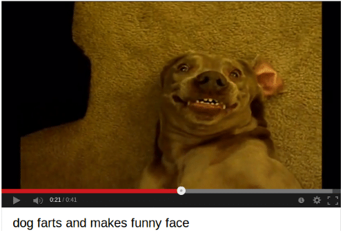 funny face: 0:21/0:41  0  dog farts and makes funny face