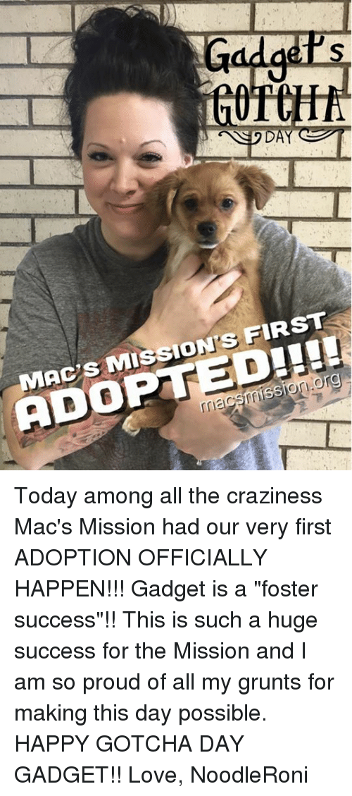 """Love, Memes, and Happy: 0  DAY  MAC'S MISSION'S FIRST  ADOPTED!!  rriacsmission.org  G Today among all the craziness Mac's Mission had our very first ADOPTION OFFICIALLY HAPPEN!!! Gadget is a """"foster success""""!! This is such a huge success for the Mission and I am so proud of all my grunts for making this day possible.   HAPPY GOTCHA DAY GADGET!!   Love, NoodleRoni"""