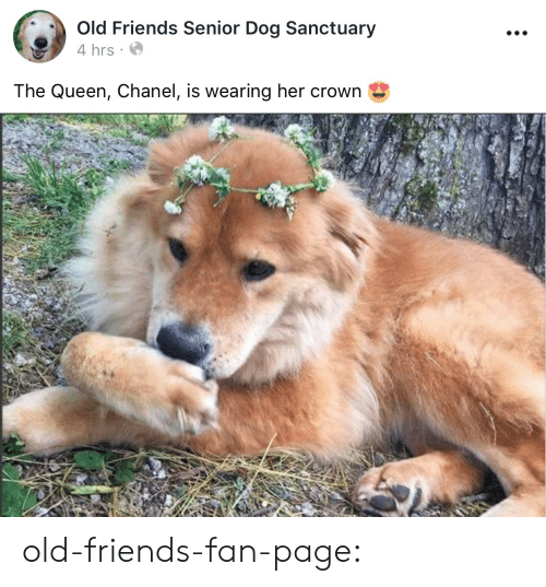 old friends: 0  Old Friends Senior Dog Sanctuary  4 hrs  The Queen, Chanel, is wearing her crown old-friends-fan-page: