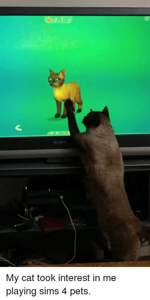 Sims  Cats And Dogs Pirate