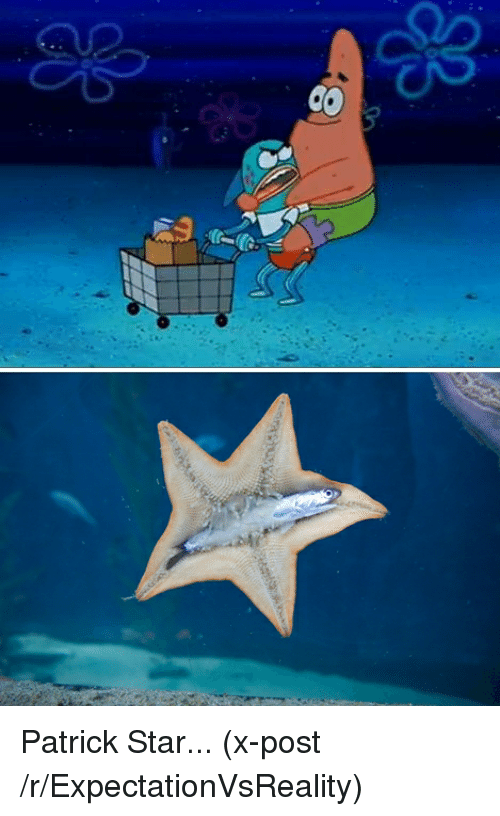 funny patrick star and funny memes of 2017 on sizzle
